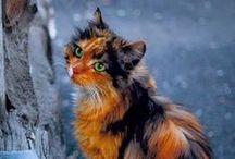 Cats. / Cats duh.