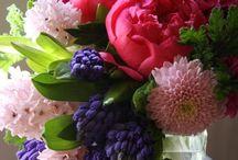 Fleurs / Esplosione di colori