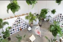 Sydney 'Treechange' pop-up / For our Sydney customers to be able to experience Bared in person we decided to pack up some shoes and some extra large plants and head off on a week long 'Tree Change'. The high ceilings at Megan Morton's ' The Studio' space made for the perfect place to set up our little oasis. The incredibly talented Wona from Loose Leaf made the trip with husband Charlie to create and hang our amazing leaf installations. Paper tiger box making later we are ready to open the doors. Hello Sydney :)