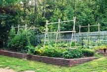 Green thumb / Anything garden... / by Carly Kolk