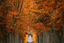 Ahh Fall / by Melissa Murphy