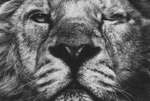 Beast / by Petunia