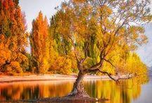 Trees - Nature