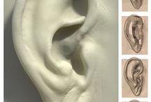 3d art || Ears