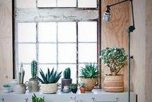 Home | Indoor plants & flower arrangement