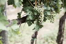 Food | Grapes