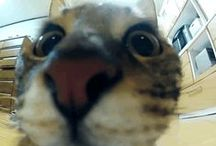 Quirky Cat Videos / by Messenger Spirit www.ascensionnow.co.uk
