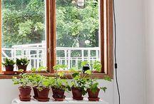 Fönsterbrädan