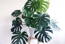 | Plant decor