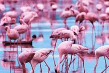 Pink, pink everywhere!