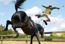 Epic Horse Riding Fails / Wantedz makes it easy to find those hard to find and sort after items. Post a wanted out to thousands of horse owners, hobbiests, and club enthusiasts. Free to join, free to post, free to reply.