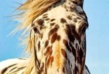 Spotty Horses / Post a wanted out to thousands of horse owners, hobbiests, and club enthusiasts. Free to join, free to post, free to reply.