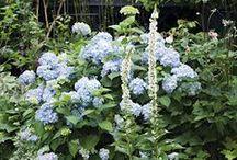 Bordure / Fiori e piante per un giardino da sogno