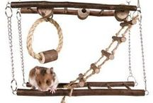 Hamster Mania / #Hamster #Animal #Pets #Crafts #DIY