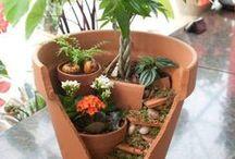 GARDENING / #Plants #Gardening