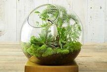 TERRARIUM / #Terrarium #Plant #Art