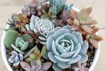 SUCCULENT #Plants / #Succulent #Plants #Gardening
