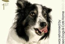Postage stamps: Dogs