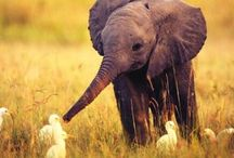 Elephants / Clumsy but intelligent