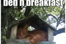 Bed & Breakfast / Everything about 'bed and breakfast'. Names, houses, the most exclusives, jokes, ect, ect.