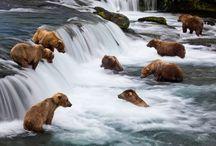 Alaska / by D Norwich