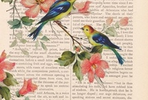Oiseaux/Bird