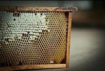 pszczółki/ bees