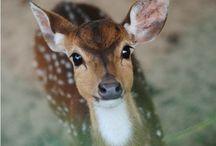 Yes my deer!