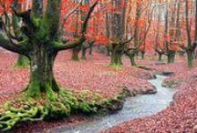 Otoño en bosques de España. / Cuando empieza a refrescar y llega el otoño, la naturaleza nos sorprende tiñendo el paisaje de colores. Del verde frondoso de la primavera y del verano se pasa a una paleta que va del verde al rojo pasando por mil matices de amarillo, ocre y marrones. En España hay muchos lugares en los que disfrutar de los coloridos lienzos que el otoño pinta en nuestros bosques.