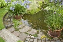 Pondering Ponds / All Things Ponds