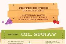 Organic gardening / This board has pins relating to organic gardening. Pesticide-free recipes for pests, ways to compost, uses for rainwater, natural fertilizers, and more.