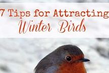 All About Birds / This board contains information on bird feeding, housing, and attracting. There are also pins about butterflies and other living creatures.