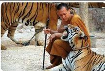 Kanchanaburi, River Kwai / Kanchanaburi wurde unter König Rama I. gegründet. Es war während des Thai-Burmesischen Krieges die Verteidigungslinie der am Three Pagodas Pass einfallenden Burmesen. #Kanchanaburi liegt am #River_Kwai und an der weltberühmten Brücke am Kwai, die durch Pierre Boulles gleichnamigen Roman und David Leans Verfilmung unvergesslich wurde. Zur Homepage: http://www.kombiurlaub.eu/thailand