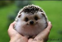 ♔ Too Cute! ♔