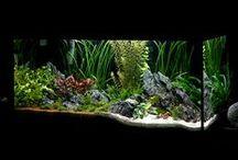 Aquarium Inspirations