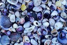 seashells & s u c h .