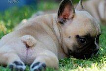 Animal Lover / The Cutest animals around!