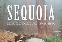 4. Stop Sequoia NP / Mittwoch08.06.2016Death Valley-Sequoai NP 350 Meilen6h Donnerstag09.06.2016Sequoai NP-Yosemite NP150Meilen 3,5h