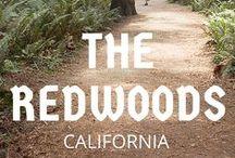 8.Stop Red Woods / Dienstag14.06.2016Napa Valley-Red Woods300 Meilen5h Mittwoch15.06.2016Red Woods-Craterlake NP200Meilen 4h
