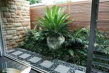 Interior garden!