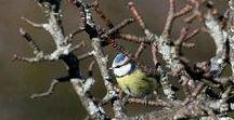 Charly's (birds) photos