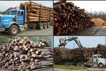 Tree Service & Firewood / Websites about wood!  #webdesign
