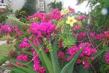 Cabarete Beach Houses Gardens / Our gardens and grounds!