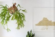 Gardening ~ Indoors / Terrariums, potted plants, kokedama, string gardens and more methods of bringing the garden inside.