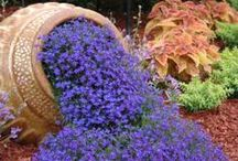 Container Gardens / by Sally Morrison