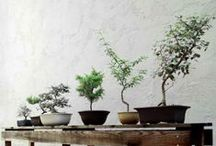 Plants / by Hannah Grundmann