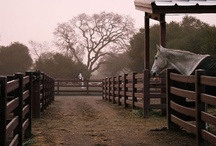 Horse Stuff / by Evelyn Dessler