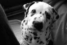 If I ever get a dog