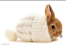 AUF WIEDERSEHEN, PET / Puppies, rabbits, kittens, all kinds of fluffy little cuties!