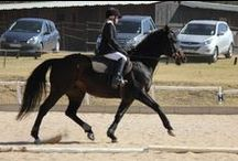 AppianWay / Thoroughbred Sport Horses South Africa